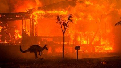 Australia bajo fuego: muertos, desaparecidos, miles de evacuados y millones de animales arrasados