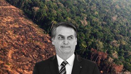 Amazonia amenazada: con Bolsonaro se perdió una superficie similar a El Salvador