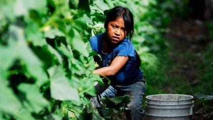 """Empresarios """"preocupados"""" por el trabajo infantil. El lobo en el gallinero"""