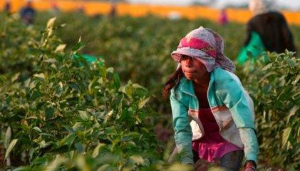 Mate amargo: 150 años de explotación laboral a las infancias en Misiones
